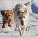Hundebuggy - Joggen