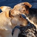 Hundebuggy fuer mehrere Hunde